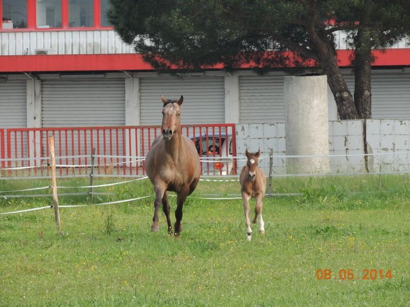 Mes chevaux, un mélange d'un peu tout le monde! - Page 9 Uppy_e26