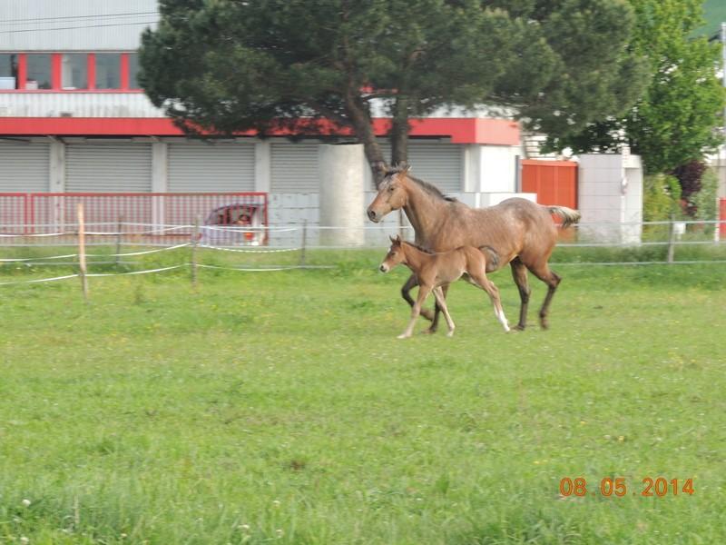 Mes chevaux, un mélange d'un peu tout le monde! - Page 9 Uppy_e27