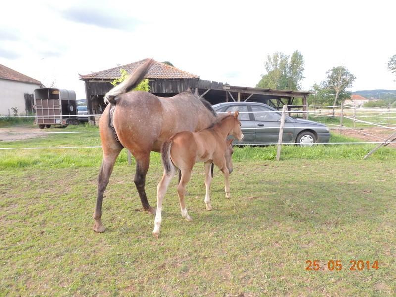 Les poulains né à l'Appaloosa IJ Farm Uppy_e30