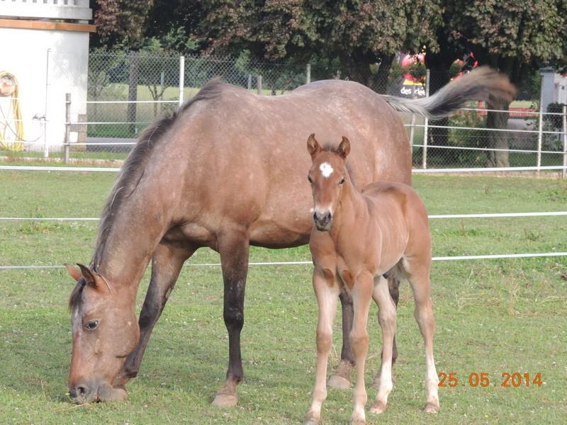 Les poulains né à l'Appaloosa IJ Farm Uppy_e32