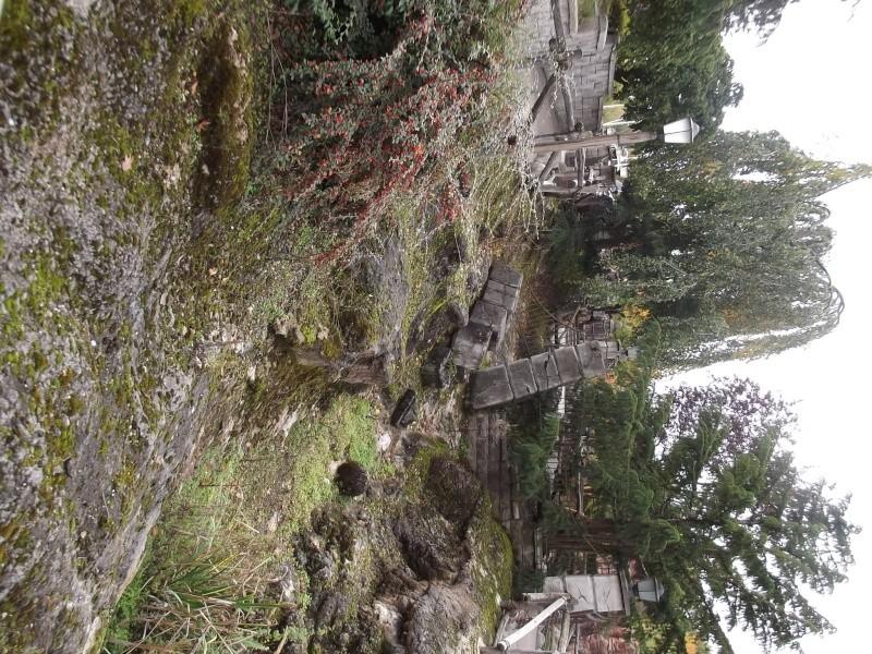 Séjour au séquoia aux couleurs d'automne Dscf1731