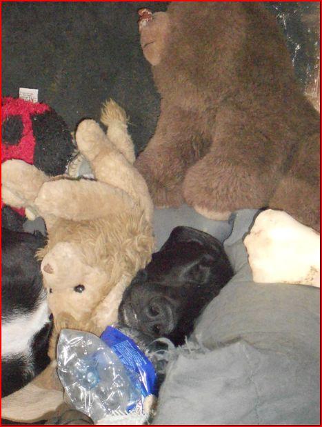 Florence Squelette de Merida à l'adoption  Scooby France    Adoptée  - Page 4 Adopti29