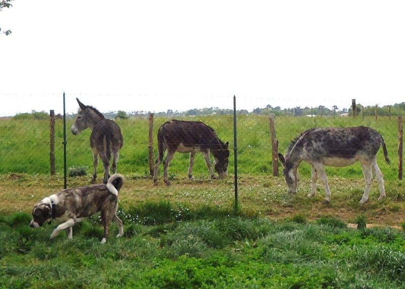 Aidons les ânes de Babeth Dsc03331