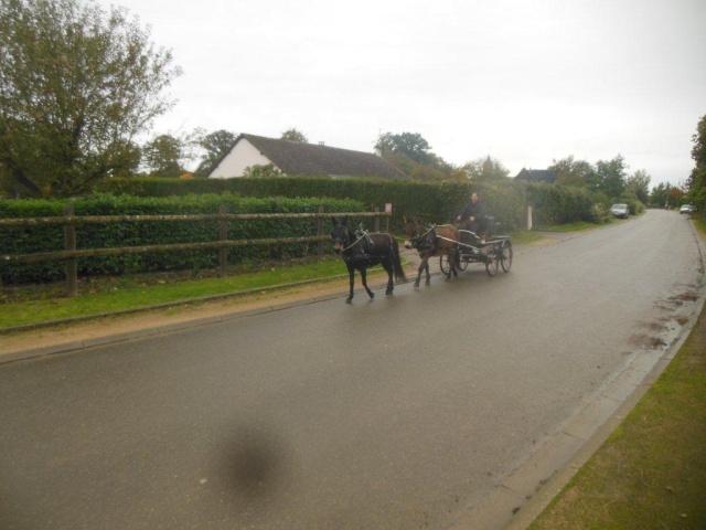 Mon projet d'attelage à 4 mules pas à pas ... Dscn7010