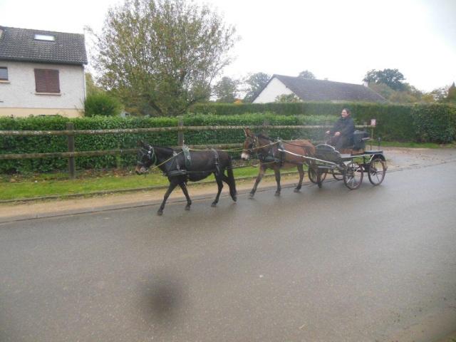 Mon projet d'attelage à 4 mules pas à pas ... Dscn7011
