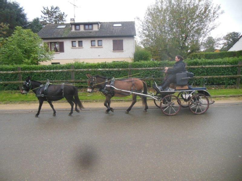 Mon projet d'attelage à 4 mules pas à pas ... Dscn7012