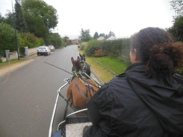 Mon projet d'attelage à 4 mules pas à pas ... Dscn7013