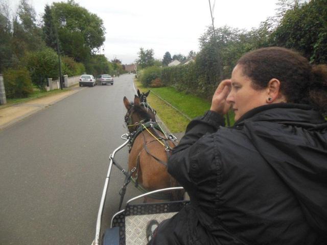 Mon projet d'attelage à 4 mules pas à pas ... Dscn7014