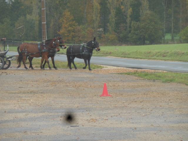 Mon projet d'attelage à 4 mules pas à pas ... Dscn7015
