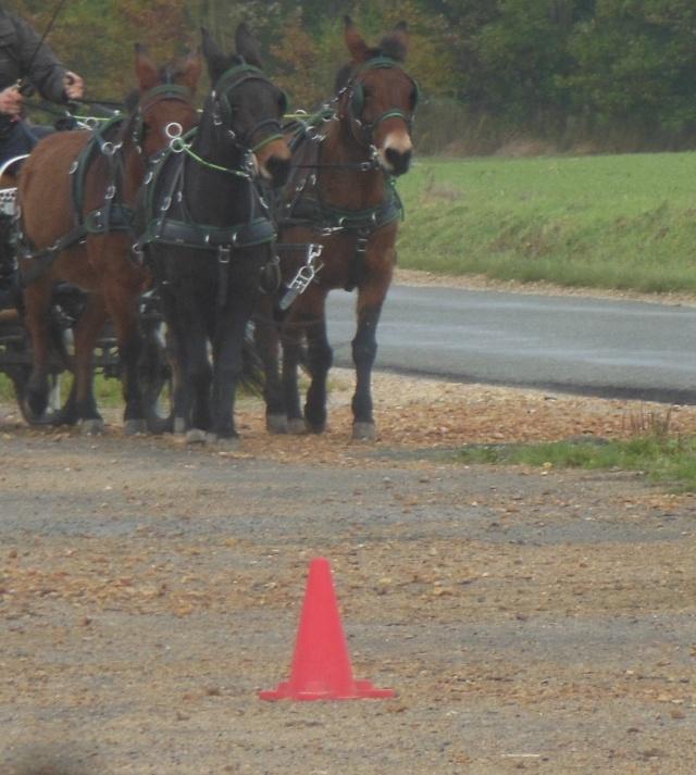 Mon projet d'attelage à 4 mules pas à pas ... Dscn7016