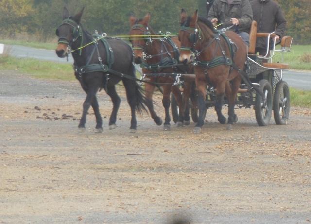 Mon projet d'attelage à 4 mules pas à pas ... Dscn7017