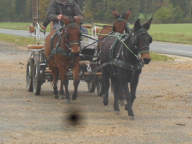 Mon projet d'attelage à 4 mules pas à pas ... Dscn7110