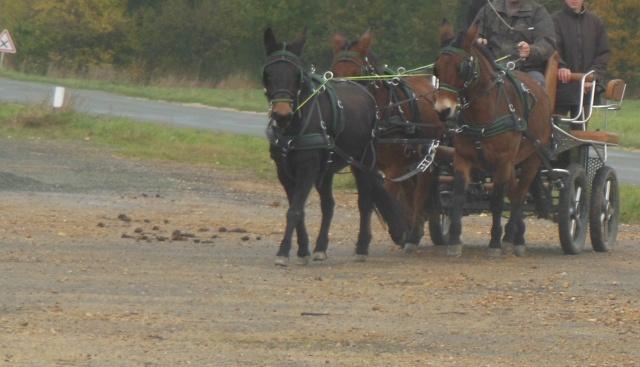 Mon projet d'attelage à 4 mules pas à pas ... Dscn7111