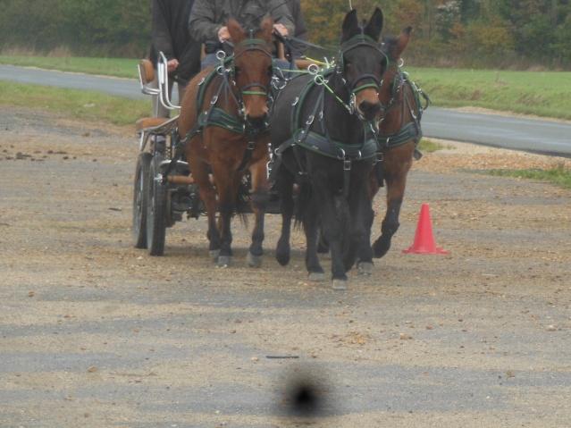 Mon projet d'attelage à 4 mules pas à pas ... Dscn7112