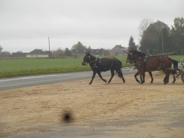 Mon projet d'attelage à 4 mules pas à pas ... Dscn7113