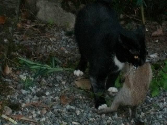 mon beau chasseur:pilou Octobr46