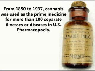 Le Cannabis - Page 5 Medica10