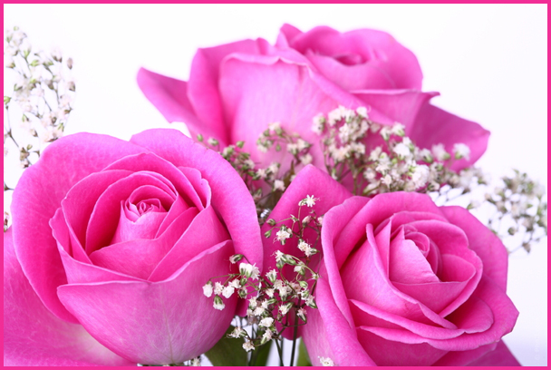 BONNE FETE A TOUTES LES MAMANS Roses11