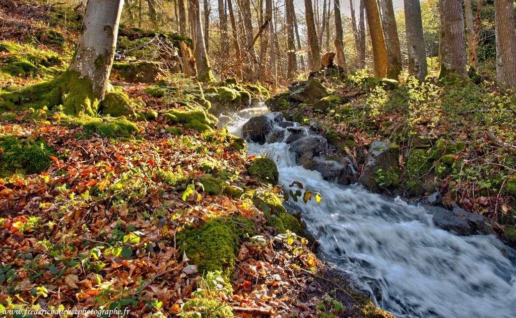 rivière dans les bois Riviar10