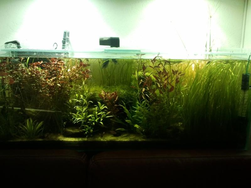 Nouvel aquarium 450 litres - Page 2 Aqua11