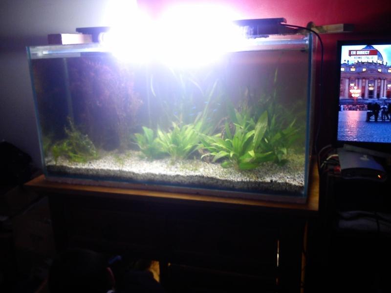 mon premier aquarium 240 brut avec installation de la  décante  Dsc_0312