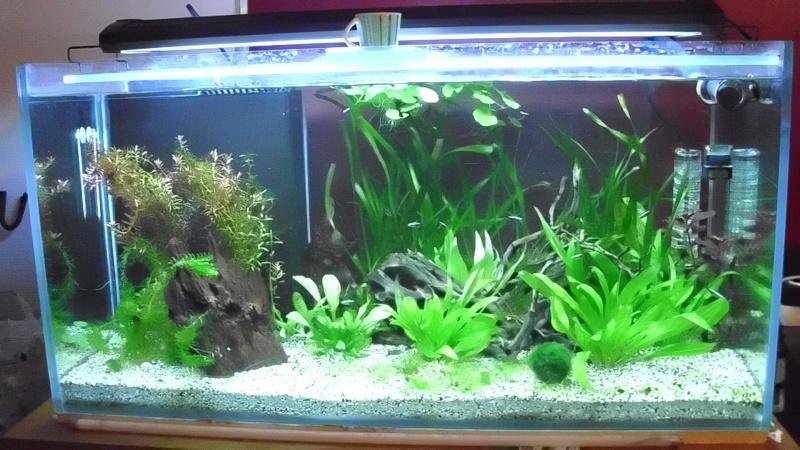 mon premier aquarium 240 brut avec installation de la  décante  Dsci0114