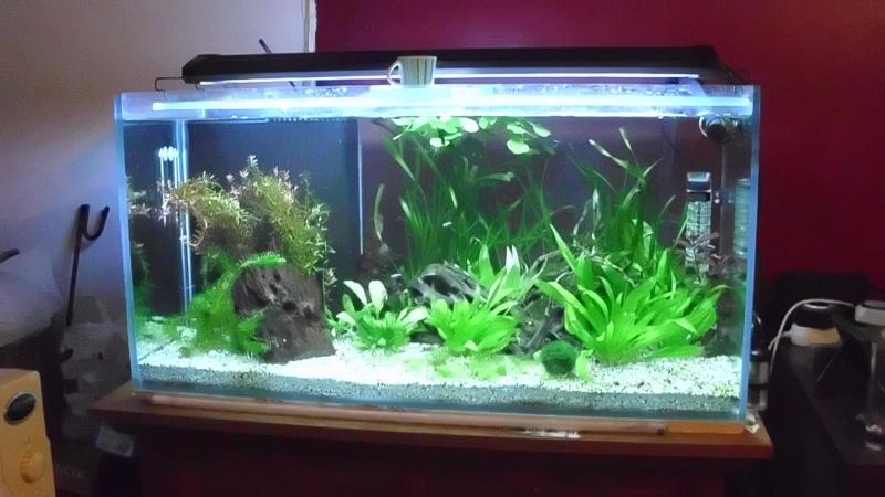 mon premier aquarium 240 brut avec installation de la  décante  Dsci0116