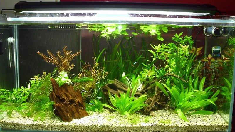mon premier aquarium 240 brut avec installation de la  décante  Dsci0117