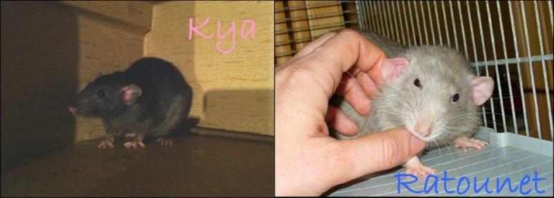 IND Kya X INC Ratounet Couple10