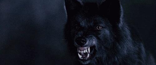 .: Crow the faithful slayer :. Crows13