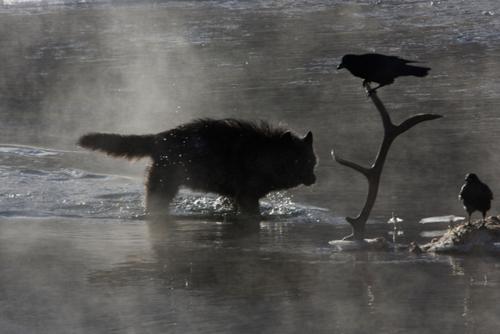 .: Crow the faithful slayer :. Crowss14