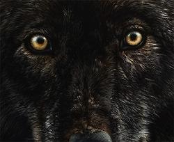 .: Crow the faithful slayer :. Crowss15