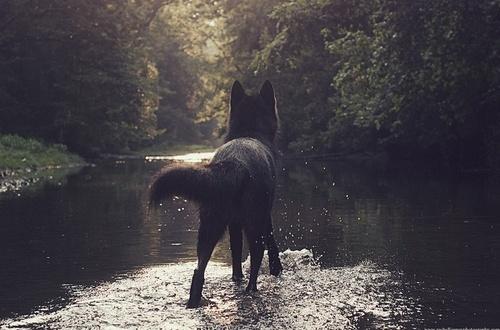 .: Crow the faithful slayer :. Tumblr18