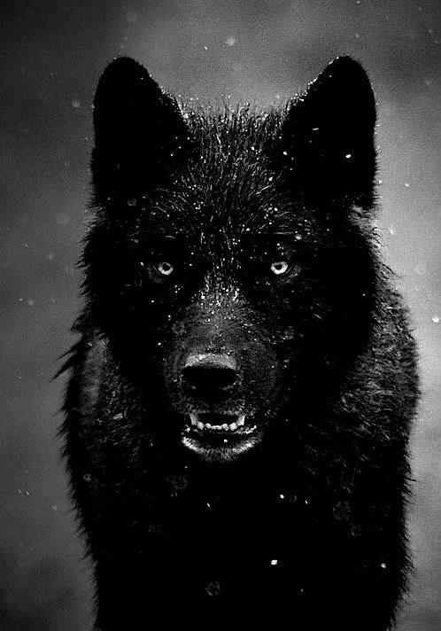 .: Crow the faithful slayer :. Tumblr20