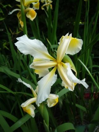 Floraison au fil du temps chez Zinna P1060412
