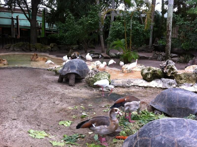 5 Auvergnats en Floride - Universal Busch Gardens et WDW Octobre 2013 - Page 4 Nokia100