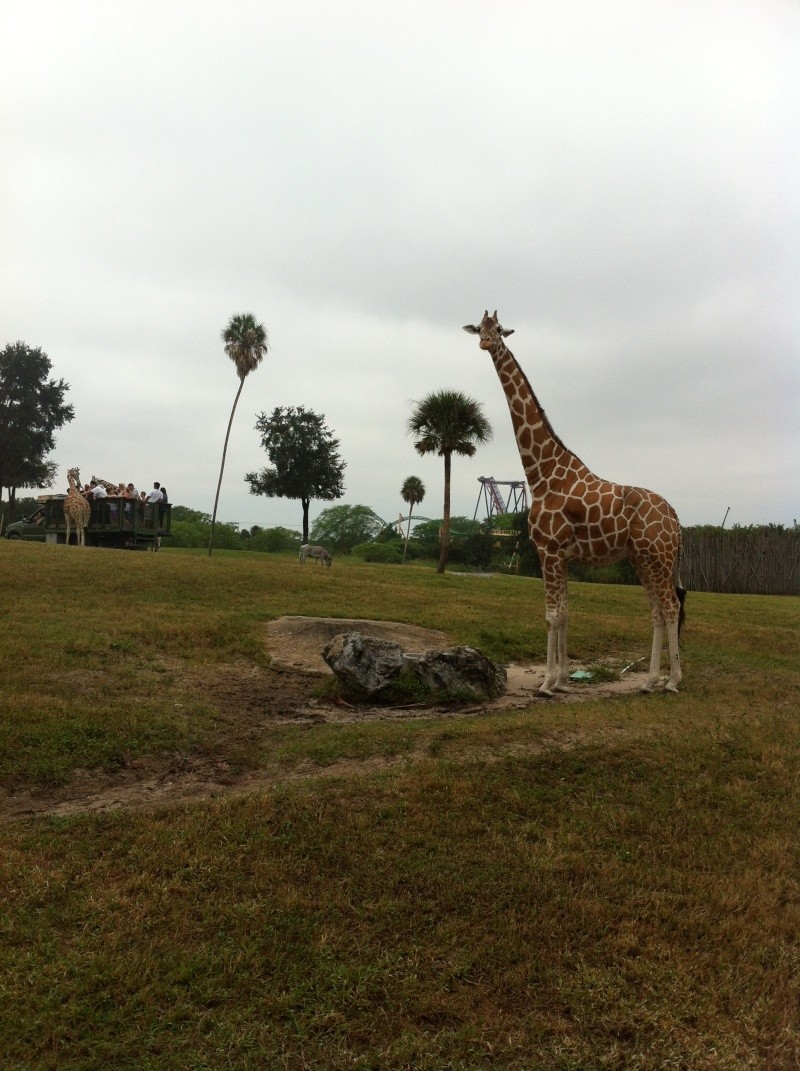 5 Auvergnats en Floride - Universal Busch Gardens et WDW Octobre 2013 - Page 4 Nokia104