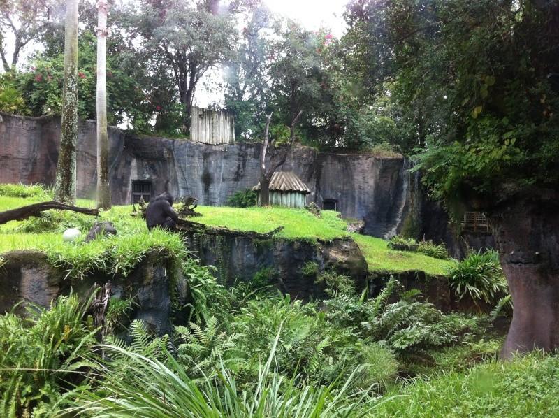 5 Auvergnats en Floride - Universal Busch Gardens et WDW Octobre 2013 - Page 4 Nokia_95