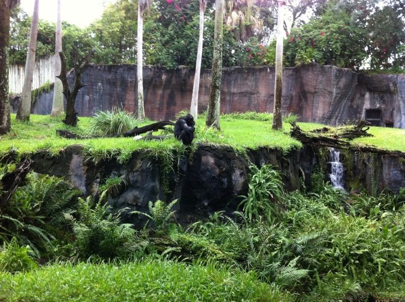5 Auvergnats en Floride - Universal Busch Gardens et WDW Octobre 2013 - Page 4 Nokia_96