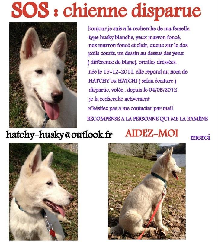 HATCHY femelle husky blanche DISPARUE 47 Montag10
