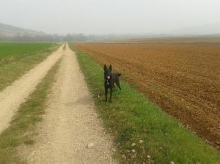 RUBY (femelle croisée border/berger) réservée 20140317