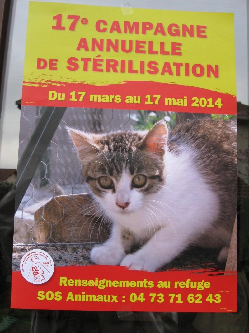 Campagne de stérilisation 2014 Travau10