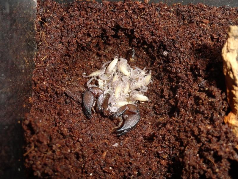 Envyizm's scorpion pictures - Page 7 Dsc00713