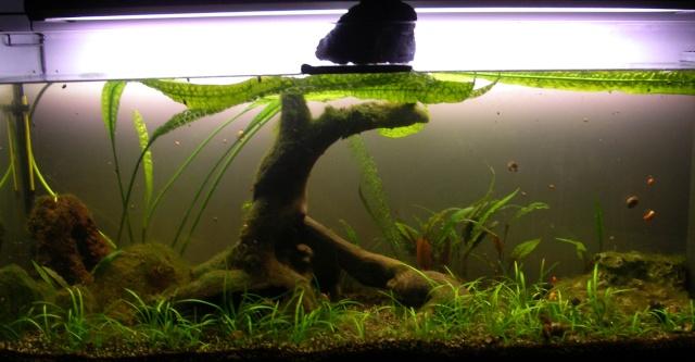 mon gros aqua (mis en eau le 30 juin 2013) Imgp1923