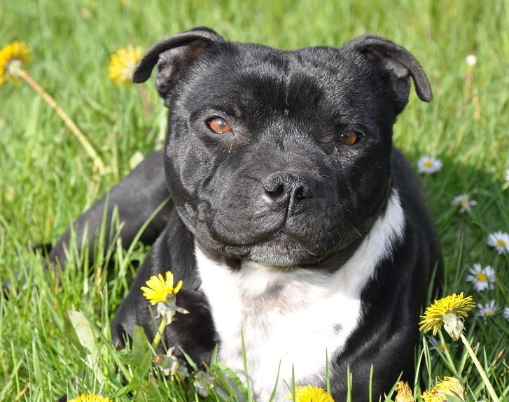 à Adopter chienne Florine - 3 ans Florin10