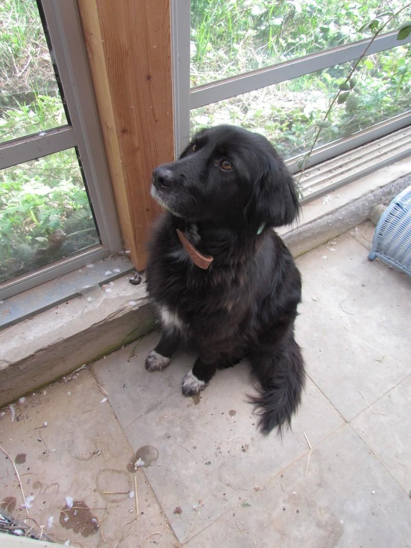 Benny, née en 2003, très sociable et calme - Adoptée Benny_12