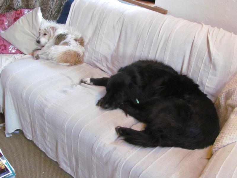 Benny, née en 2003, très sociable et calme - Adoptée Rox_et11