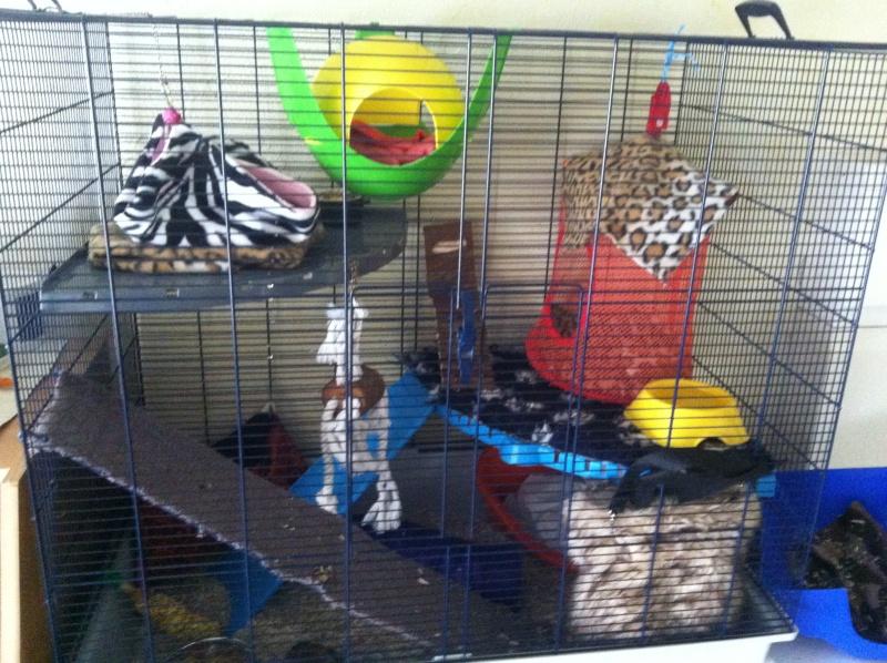 haska et ses bebes photos !!! nouvelles photos !!! trop beaux !!!lool Cages_12