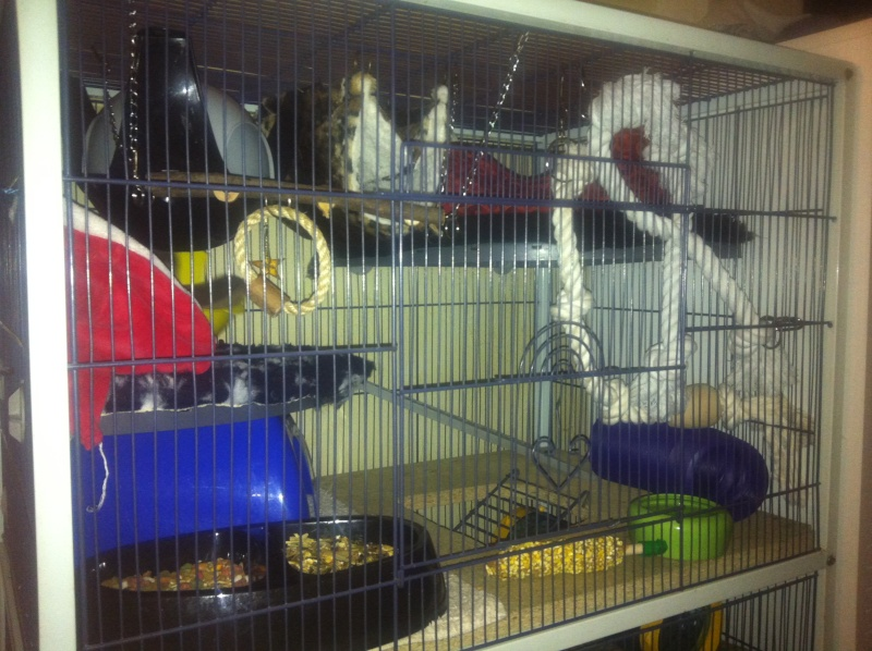 cage reamenagée photos!!! Img_3432