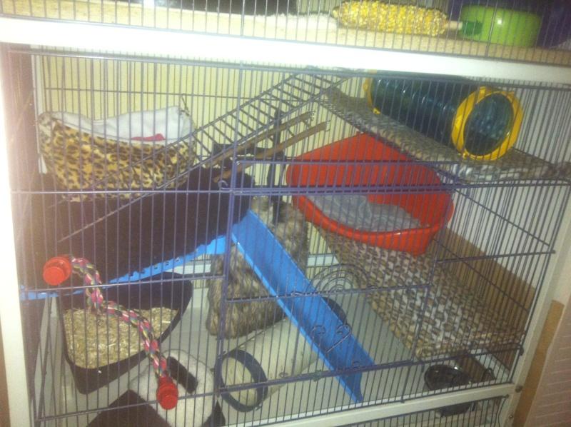 cage reamenagée photos!!! Img_3433